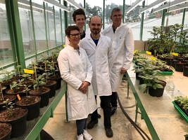 A team of biochemists at FAU led by Prof. Dr. Uwe Sonnewald have discovered why potato plants form significantly lower numbers of tubers or sometimes none at all at higher temperatures. The authors of the study from FAU (from left): PD Dr. Sophia Sonnewald, Günter Lehretz, Dr. José María Corral García and Prof. Dr. Uwe Sonnewald. (Image: FAU/Rabih Mehdi)
